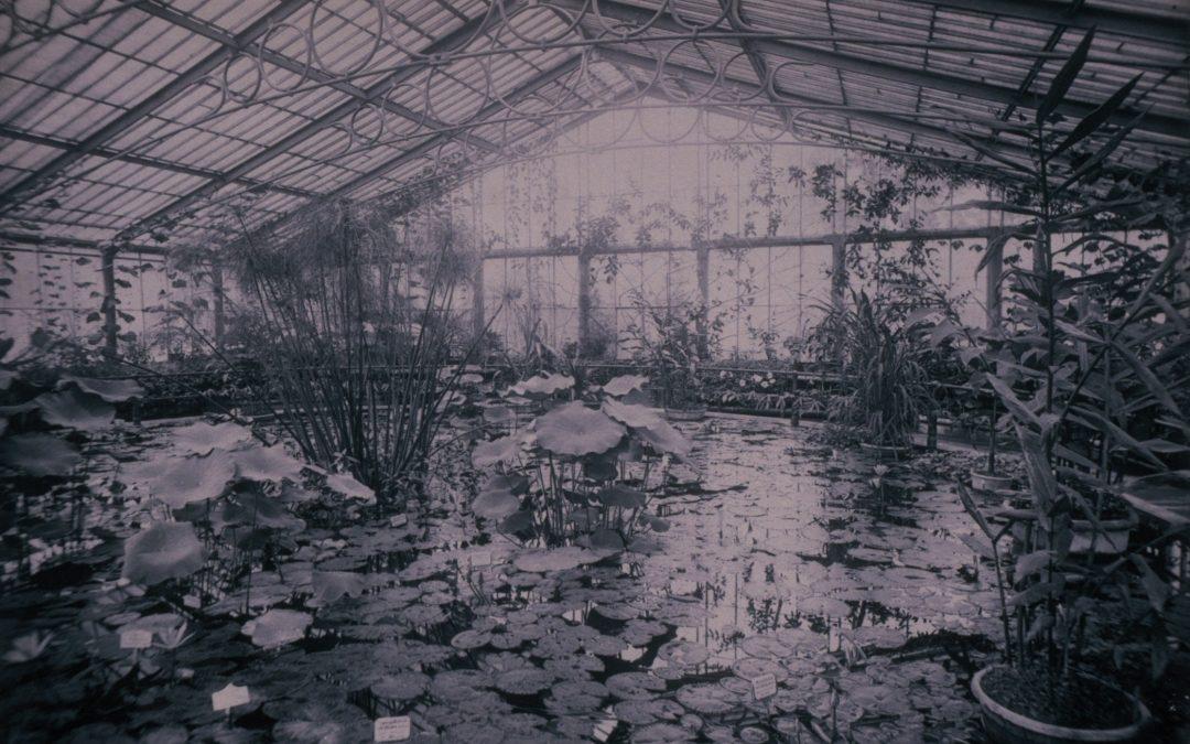 Image Scrapbook: Glasshouses